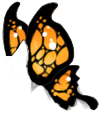 Black/Orange Butterfly Wings