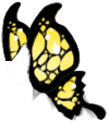 Black/Yellow Butterfly Wings